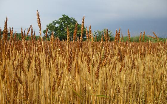 小麦色の季節