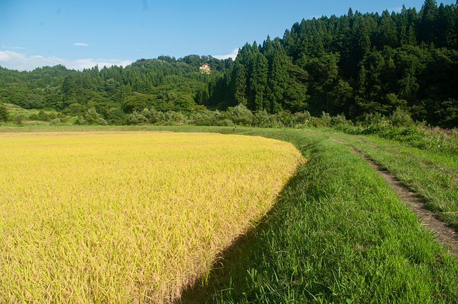 相川字中島